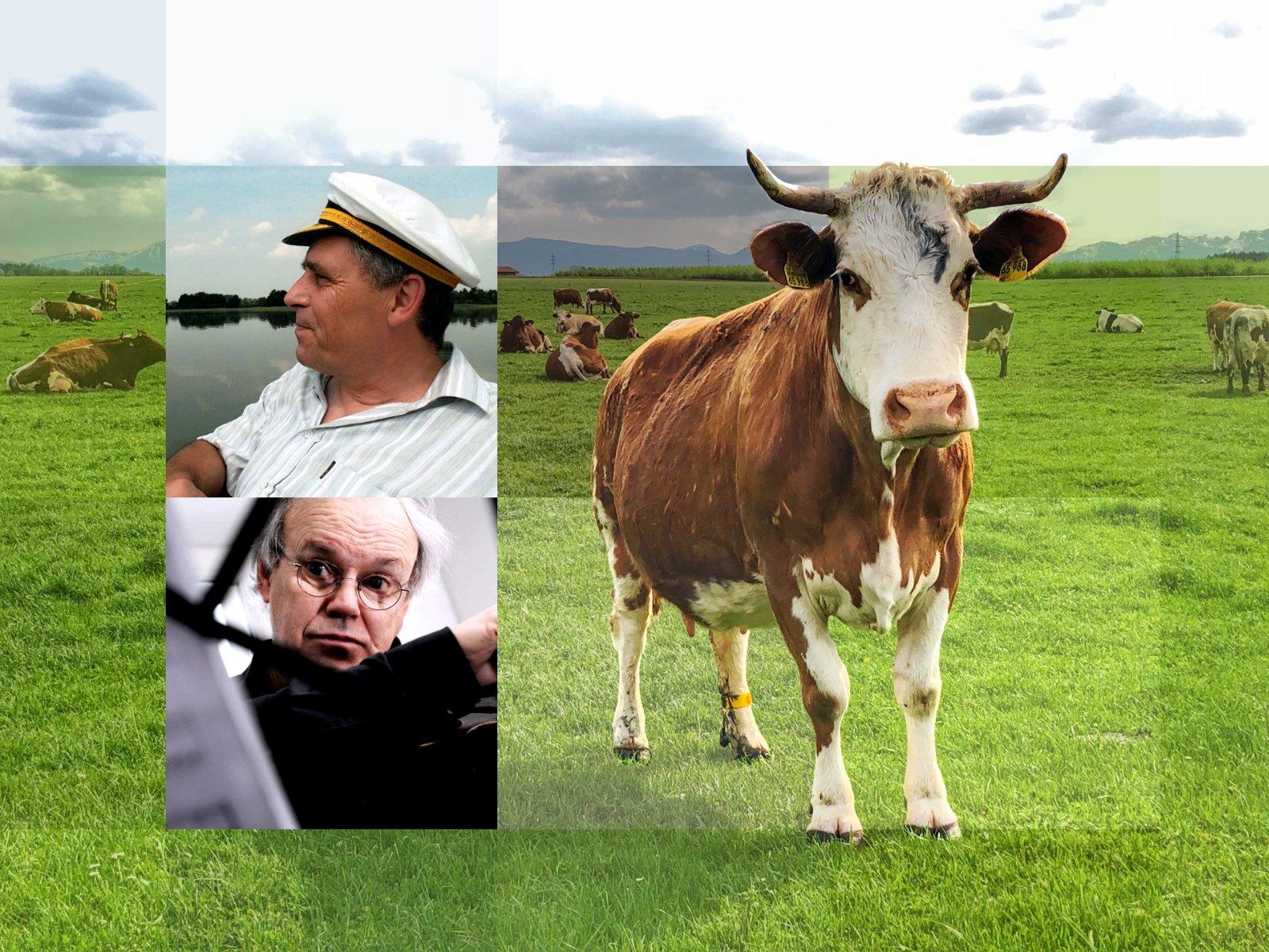 Tanz der Kühe